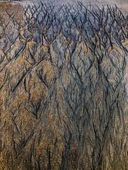 Tybee sand marks (The Big Photog) Tags: tybee island sand scars