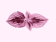Lavender (Taymaz Valley) Tags: digitalart digitalism art artist photoart photography photographer love ottawa ottawaart ottawaartist ottawaphotographer ottawaphotography montreal toronto tokyo nyc losangeles vancouver london paris berlin japan iran