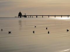 Pier in Zinnowitz (Waldrebe) Tags: ostsee balticsea mecklenburgvorpommern usedom