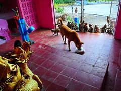 ,, A Dragon 4 Protection - Explored ,, (Jon in Thailand) Tags: pink purple green gold blue yellow burgundy monkeys apes primates dog k9 rescueddog dogrescue thespirithouse jungle themonkeytemple nikon nikkor d300 175528 orange mama thetube bamboocane dragon dragonhead littledoglaughedstories