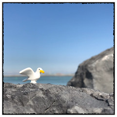 A gull like you... (hd_lego) Tags: seagull bird northsea toyphotography toys afol rocks ostend minifigures lego sea