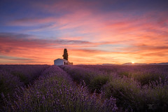 A provencal cliché (Bilderschmied-Danz) Tags: france frankreich provence valensole lavender lavendel purple lila feld field haus house baum tree berge mountains sunrise sonnenaufgang wolken clouds bilderschmied