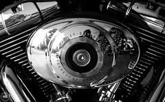 2003 Harley-Davidson 100th Anniversary Edition (SonjaPetersonPh♡tography) Tags: britishcolumbia canada nikon nikond5300 afsdxnikkor18300mmf3563gedvr 2003 anniversaryedition motorcycle harleydavidson emblem bike kelowna centennial celebration harleydavidsonmotorcompany blackwhite 100thanniversary comemorative harleydavidsonmotorcycle
