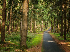 The way must be gone (Zoom58.9) Tags: forest trees way path green grasses outside nature landscape europe germany niedersachsen wald bäume weg