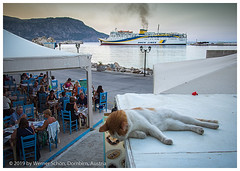 Hey, how about some Fish for me ? (WS Foto) Tags: pigadia karpathos dodekanes greece griechenland katze taverne cat tavern dodecanes greekislands griechischeinseln hafen lokale europe eu