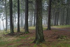 {EXPLORE} enchanted (Frau Koriander) Tags: wald woods forest nature natur landscape landschaft nikond750 nikkor35mmf2d 35mm enchanted taunus groserfeldberg feldberg mittelgebirge bäume trees tree explored inexplore explore