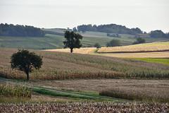 A travers la campagne (Excalibur67) Tags: nikon d750 sigma globalvision contemporary 100400f563dgoshsmc paysage landscape champs campagne arbres trees nature automne autumn céréales récolte