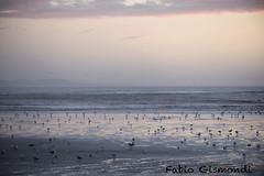 ESSAOUIRA (fabiogis50) Tags: essaouira morocco marocco seagull sea gabbiano lowtide sand sunset