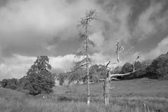 OddCouple (Tony Tooth) Tags: nikon d7100 sigma 1750mm trees pair couple oddcouple oddpair countryside bw blackandwhite monochrome england beresforddale hulmeend staffs staffordshire