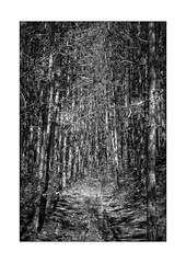 way of no return (Armin Fuchs) Tags: arminfuchs nomansland wayofnoreturn forest trees way nature light shadow anonymousvisitor thomaslistl wolfiwolf jazzinbaggies