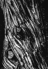 BarkWound.jpg (Klaus Ressmann) Tags: klaus ressmann olympus omd system abstract autumn boilingriver montana usa bark blackandwhite contrast design flcabsnat tree klausressmann olympusomdsystem