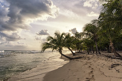 Beach sunset (mystero233) Tags: sunset sun sunrays dusk beach sea water palm palmtree tree barbados sand island caribbean sky nature outdoor landscape travel holiday summer warm memories