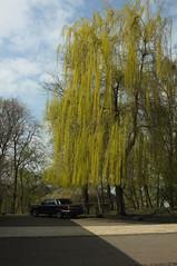 *** (Boris Rozenberg) Tags: car carphotography photography photooftheday moment snapshot tree trees composition fujix100 x100 light lightening daily snap green chaos harmonie tourism kiev ukraine nature