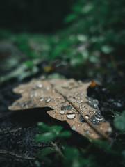 (Patryk Rejdych) Tags: forest rainy polska poland sonyrx100 sony bokeh nature