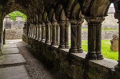 Sligo - Sligo Abbey Cloister 8 (Le Monde1) Tags: ireland connacht connaught republic nikon d7000 countysligo eire yeats abbey cloister graveyard garth pillars mauricefitzgerald abbeyquarternorth 1253 dominicanfriary sligoabbey ruins rivergaravogue