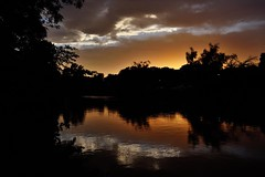 Sunset across the pond (Abhay Parvate) Tags: sunset pond water goldenhour reflection clouds silhouette nature shakujiipark 石神井公園