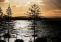 'cathedral' spires of nature __ (Ardan_Dojan) Tags: nature cathedral spires golden sunset cloudscape sunrays silhouette glistening ocean waters bay hills trees pines firs onewithnature landscape seascape photoart trip naturephotography natural naturelandscape naturaleza landscapephotography light australia travel onlythebestofnature