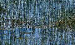Which Way is Up (rlt64) Tags: abstract reflections water nature