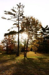Fall Morning glow (Keizerphoto) Tags: morning sun glow dew trees burst fall autumn ngysaex