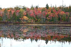 Fall Colors (Keizerphoto) Tags: fall colors trees lake duck water autumn ngysaex