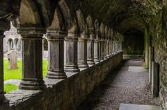 Sligo - Sligo Abbey Cloister 7 (Le Monde1) Tags: ireland connacht connaught republic nikon d7000 countysligo eire yeats abbey cloister graveyard garth pillars mauricefitzgerald abbeyquarternorth 1253 dominicanfriary sligoabbey ruins rivergaravogue