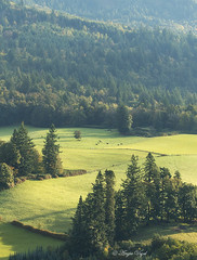 From Cape Horn Viewpoint (Angie Vogel Nature Photography) Tags: columbiarivergorge trees pasture green nature