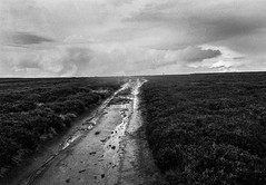 Calling me onwards (Richie Rue) Tags: rain path moors moorland heather autumn fall moody yorkshire northern outdoors landscape ilkleymoor film analogue 35mm foma fomafomapan200 rodinal nikon mindfulphotography contemplativephotography journey