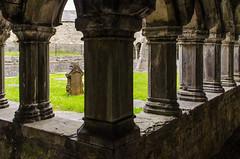 Sligo - Sligo Abbey Cloister 4 (Le Monde1) Tags: ireland connacht connaught republic nikon d7000 countysligo eire yeats abbey cloister graveyard garth pillars mauricefitzgerald abbeyquarternorth 1253 dominicanfriary sligoabbey ruins rivergaravogue