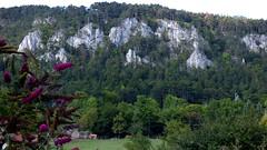 Flatzer Wand / Flatz' wall (ursula.valtiner) Tags: landschaft landscape natur nature berg mountain flatzerwand klettergebiet climbingarea kühe cows sommerflieder butterflybush flatz niederösterreich loweraustria austria autriche österreich