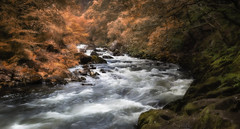 Full flow (paullangton) Tags: aberglaslyn falls wales river colour trees snowdonia rocks autumn rapids flow water wild canon 5dmk3