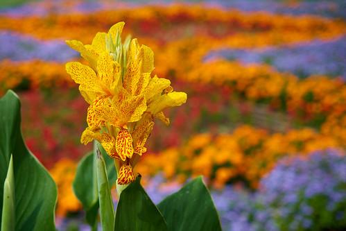 Flower 244 ©  Alexxx Malev
