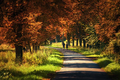 Walk in autumn (Pásztor András) Tags: nature outdoor forest road couple lovers hikers walk autumn colorful trees grass sunlight sigma 70300mm d700 full frame dslr nikon andras pasztor photography