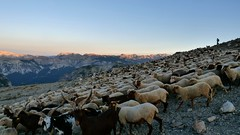 Ça caille! (François Magne) Tags: bergère mouton brebis troupeau garde matin contre jour froid