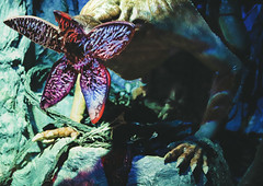 Demogorgon at Universal Orlando's Halloween Horror Nights 2019 (hernandez.philip) Tags: halloweenhorrornights halloween hauntedhouses hauntedattraction makeup costume orlando florida