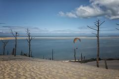 Dune du Pylat (mexou) Tags: dune france sand beach paragliding mexou blue trunks