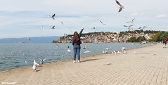 Autumn in Ohrid (borisnaumoski) Tags: ohrid macedonia lake town autumn october birds promenade urban