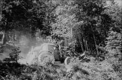 Forestry (svnsmts) Tags: 35mm dachstein austria canon a35f kosmofoto kodak portra400 shotonfilm filmphotography analog gosau