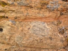 Cross-bedded sandstone (Glen Canyon Sandstone, Upper Triassic to Lower Jurassic; Dinosaur National Monument, Utah, USA) 10 (James St. John) Tags: glen canyon sandstone dinosaur national monument utah navajo nugget quartzose sandstones triassic jurassic cross bedding beds bedded crossbedding crossbedded crossbeds