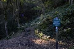 Ladybower (philept1) Tags: woodland outdoors peakdistrict derbyshire derwent footpath hill countryside nationalpark ladybower