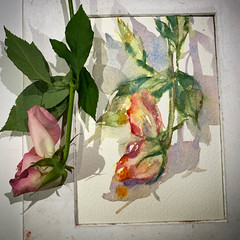 Day 1523. The #rose  #painting for today. #watercolour #watercolourakolamble #sketching #stilllife #flower #art #fabrianoartistico #hotpress #paper #dailyproject (akolamble) Tags: rose painting watercolour watercolourakolamble sketching stilllife flower art fabrianoartistico hotpress paper dailyproject