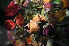 DSC_8923 (griecocathy) Tags: macro fleurs bouquet rose sécher feuille boutons lumineux ombre violet jaune orange oranger vert beige
