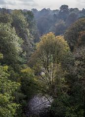 Autumn light (OzzRod) Tags: pentax k1 hdpentaxdfa28105mmf3556 valley trees woods river rivergoyt intothesun marple england pentaxart
