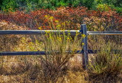 San Diego Autumn (#1) Wooden fence (FotoGrazio) Tags: color flowers nature openspace fallseason weeds autumnautumncolors california lospenasquitos waynegrazio scenic nativecaliforniaplants sandiego fence usa lovely driedplants flower highdynamicrange fall phototoart lospenasquitoscanyonpreservelospenasquitos aurora waynestevengrazio fencepost plants fotograzio hdr botanical photomanipulation waynesgrazio bloom beautiful mothernature lospenasquitoscanyonpreserve