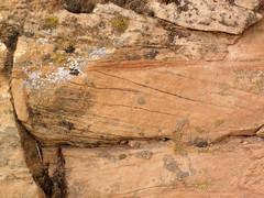 Cross-bedded sandstone (Glen Canyon Sandstone, Upper Triassic to Lower Jurassic; Dinosaur National Monument, Utah, USA) 9 (James St. John) Tags: glen canyon sandstone dinosaur national monument utah navajo nugget quartzose sandstones triassic jurassic cross bedding beds bedded crossbedding crossbedded crossbeds