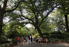 #NewYorkCity #Vacation #August2019 (Σταύρος) Tags: newyorkcity vacation august2019 centralpark nyc ny newyork manhattan uppermanhattan green fauna flora trees lookingup publicpark
