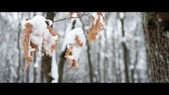From the archive: snowy forest (elkarrde) Tags: 1750 2013 a16 k20d pentax pentaxk20d tamron winter2013 forest landscape snow winter jastrebarsko croatia govićforest gović nature lake forestnomore deforested saturday february february2013 twop trees jastrebarskocounty jaska location:country=croatia location:city=jastrebarsko camera:brand=pentax camera:model=k20d kmount mediumdigital digitalphotography lens:mount=kaf2 camera:mount=kaf3 camera:format=apsc lens:format=apsc lens:brand=tamron 175028 tamronaf1750mmf28spxrdiiildasphericalif lens:model=af1750mm128spxrdiiildasphericalif tamronspaf1750mmf28diii tamron175028 tamronsp autofocus lens:maxaperture=28 lens:focallength=1750mm