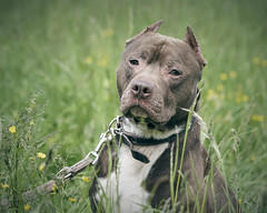 Poor guy (chribs) Tags: hund dog portrait animal pet haustier sony