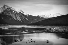 Moose at Medicine Lake (Bernie Emmons) Tags: jaspernationalpark bw moose lake mountains blackandwhite snow explore alberta medicinelake nature