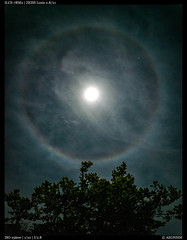 Luna Halo (Falcdragon) Tags: ilce7rm2 sonya7riialpha zeissloxia2821 moonring 22°halo lunahalo night astrophotography moon light waikato hamilton newzealand