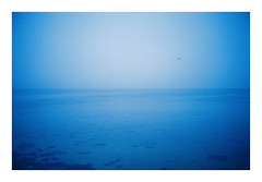 Ebeltoft, Denmark. 2019. (csinnbeck) Tags: analog film fujicolor c200 fuji fujifilm canon primazoom 85n ebeltoft denmark winter 2019 january bird sea kattagat